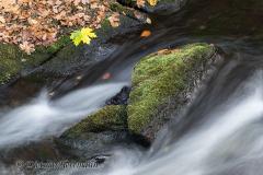 Harz-Bode-Z7-038466