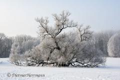010-Schnee-und-Rauhreif-an-der-Leine-Z7-049222