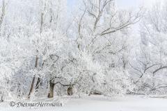 080-Schnee-und-Rauhreif-Badeteich-Z7-049536