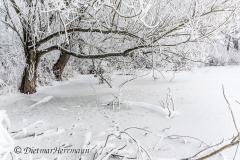 100-Schnee-und-Rauhreif-Badeteich-Z7-049575