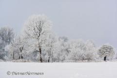 120-Schnee-und-Rauhreif-Langer-Teich-Z7-049581