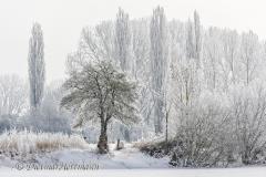 130-Schnee-und-Rauhreif-Langer-Teich-Z7-049687