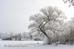 140-Schnee-und-Rauhreif-Langer-Teich-Z7-049710