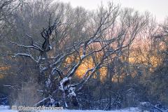 146-Sonnenuntergang-hinter-schneebedeckten-Baeumen-_DSC9273