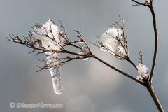 150-Schnee-auf-Zweig-D850b-046181-9