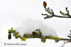 340-Flechten-und-Schnee-Z7-048600-729-2021-02-09-11-38-43-ARadius8Smoothing4